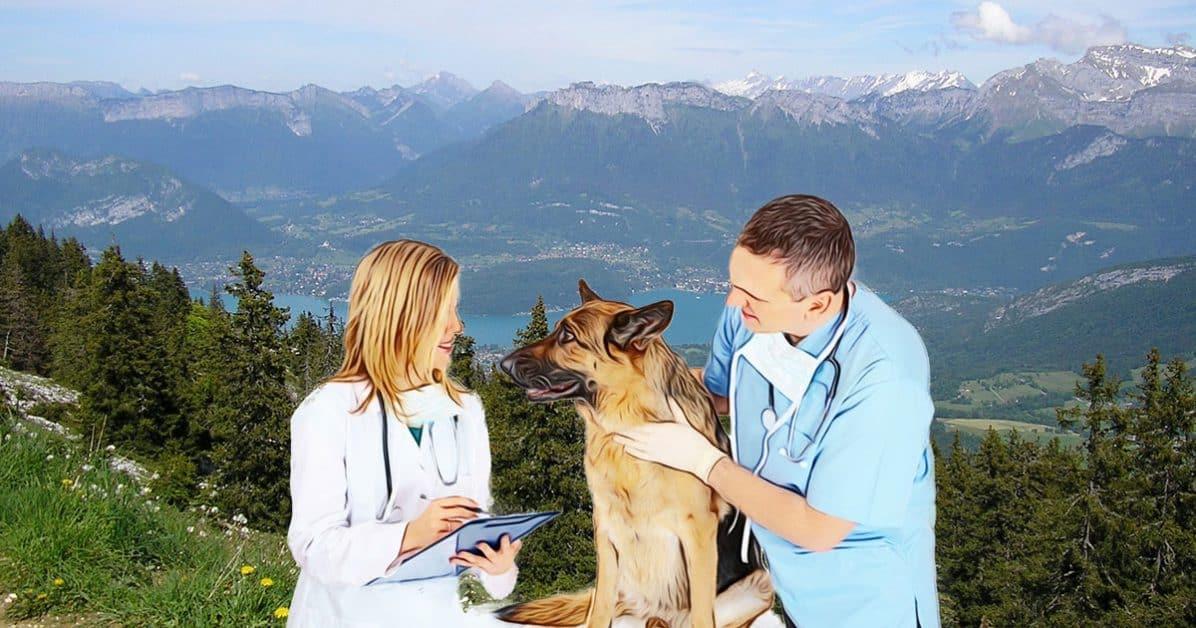 contrôle vétérinaire avant de randonner avec son chien